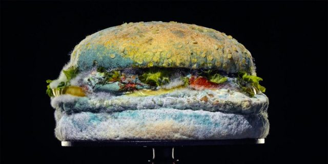 The Moldy Whopper